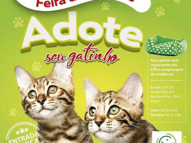 NEAFA vai realizar feira de adoção só para gatos em Maceió, AL