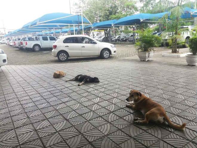 Após atropelamentos, vereadores querem 'expulsar' cachorros de área da Câmara de Manaus, AM