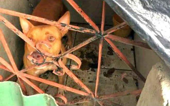 Operação 'Beethoven 4' identifica casos de maus-tratos a animais domésticos em Manaus, AM