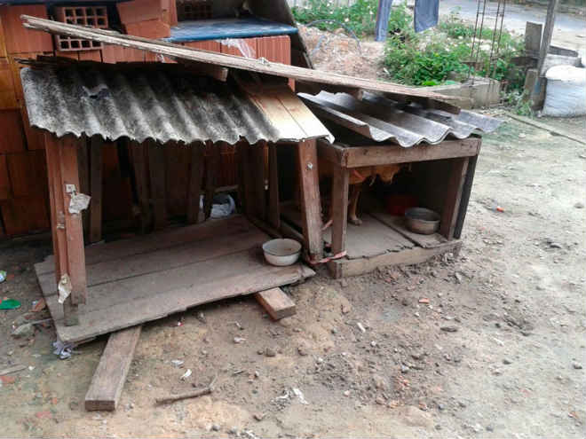 """Operação """"Beethoven 3"""" identifica maus-tratos a animais domésticos em Manaus, AM"""