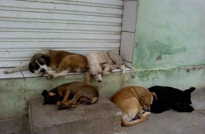 Centro de zoonoses vai combater superpopulação de animais de rua em Macapá, AP