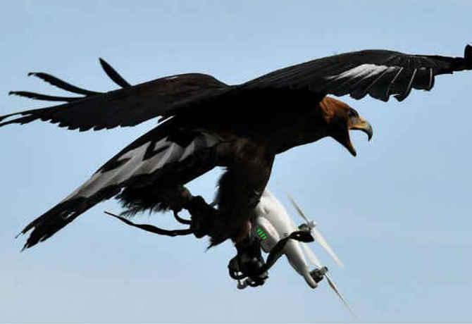 Animais atacam drones