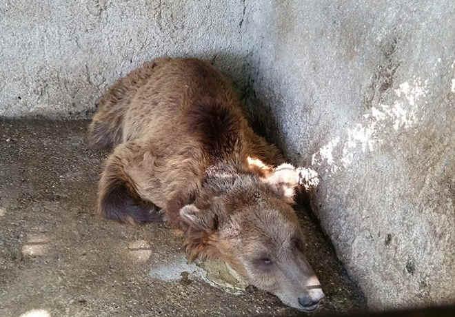 Desde bebê ele foi trancado, acorrentado pelo pescoço e forçado a beber cerveja
