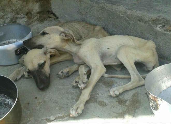 Crueldade: Cachorros são encontrados presos e sem se alimentar a vários dias em Amargosa, BA