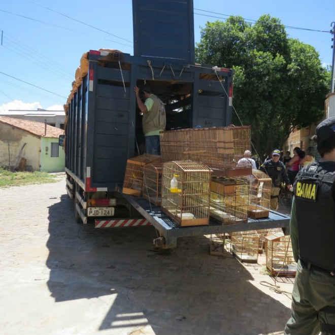 Animais silvestres são resgatados de cativeiros em Ibotirama, BA