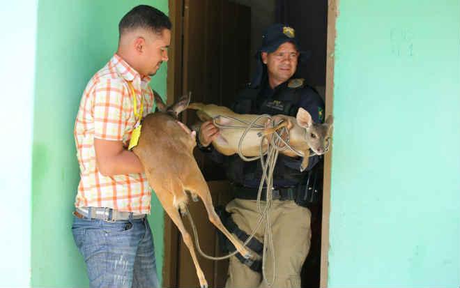 Operação com 2 presos resgata veados sendo criados como animais de estimação e mais 300 bichos no oeste da Bahia
