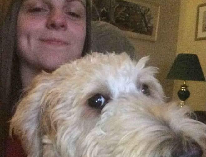Após ser colocado no voo errado, cão vai parar a 1.900 km de casa