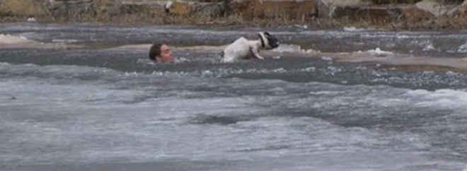 Equipe de TV flagra tutor salvando cão que caiu em lago no Canadá