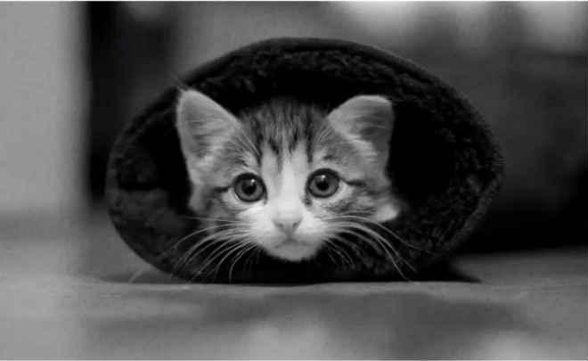 Fotógrafa registra imagens de gatos de rua em projeto pessoal
