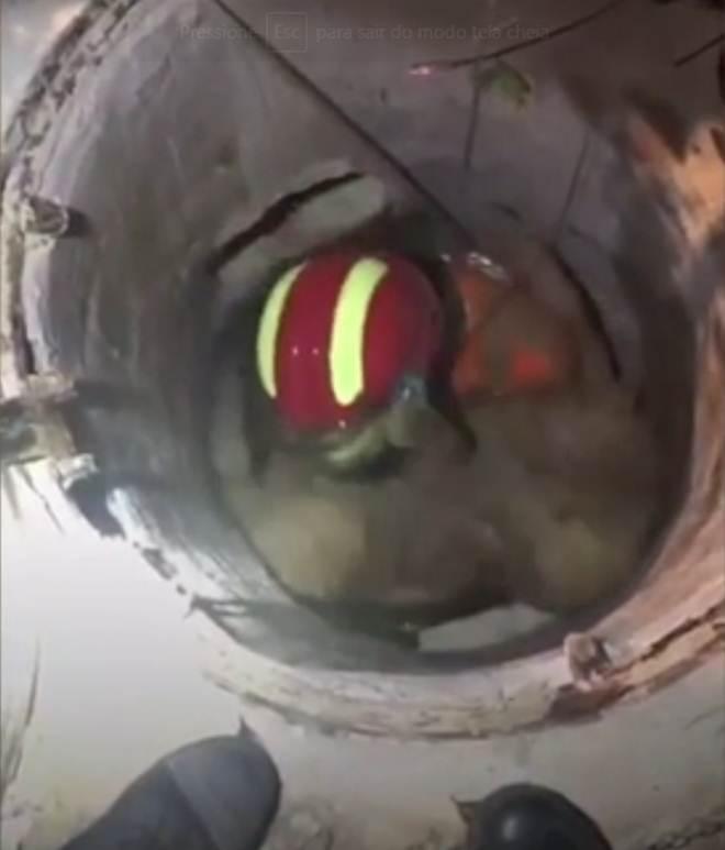 O momento em que bombeiro herói salva cão na China; vídeo