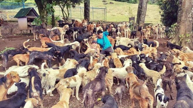 Haviam muitos cachorros abandonados na Costa Rica. Então um casal resolveu fazer algo