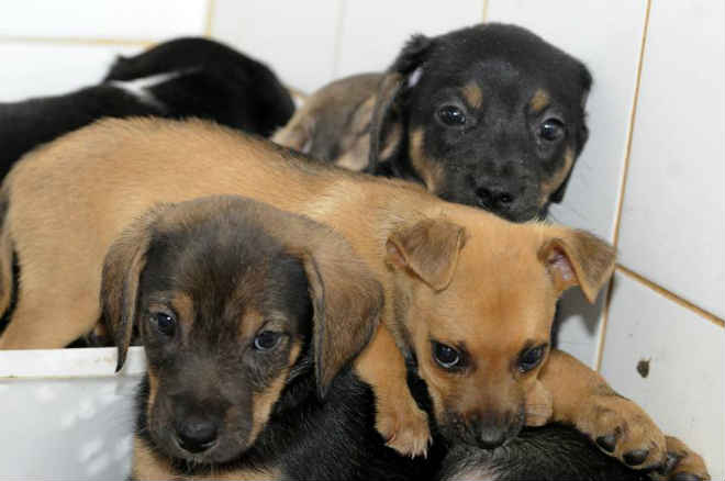 Adote: Cães e gatos do Controle de Zoonoses no DF precisam de novos tutores