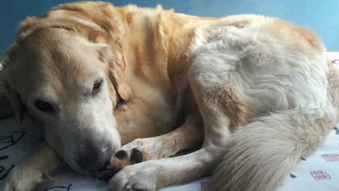 Cachorro morre envenenado durante passeio na Asa Sul, em Brasília, DF