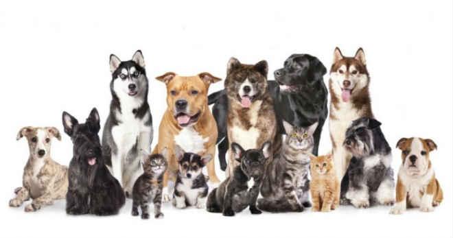 Retomado programa de castração de animais domésticos em Brasília, DF