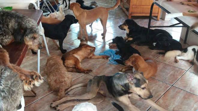 Protetora de animais teme perder 100 bichos após ser denunciada em Sobradinho, DF