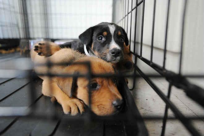 Jardim da Penha, em Vitória (ES), terá feira de adoção de cães e gatos especiais