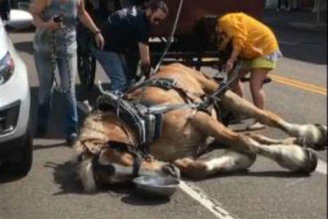 Cavalo desmaia de cansaço ao passear turistas em carruagem