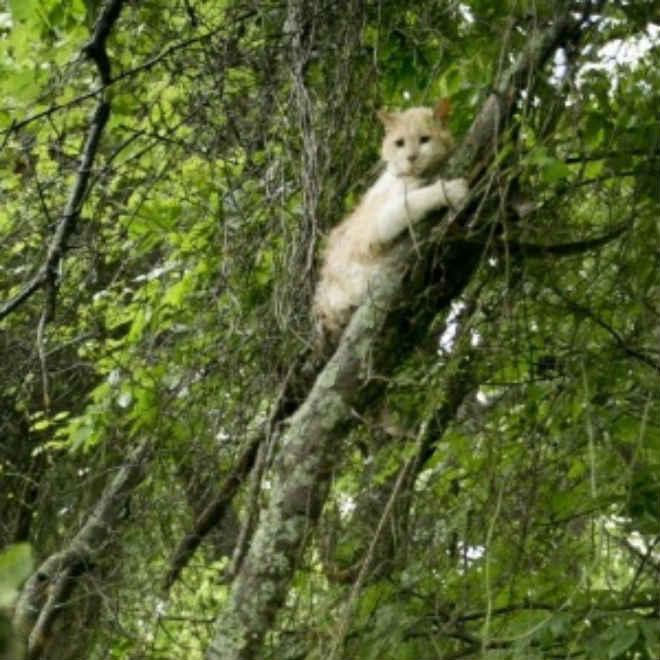 Bombeiros são chamados para tirar gato – e sua tutora – de cima de árvore…