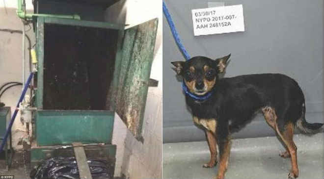 EUA: Cachorro escapa de ser triturado após ser jogado em compactador de lixo