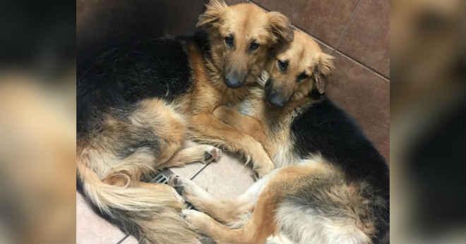 Cachorros se abraçam depois de serem abandonados na porta de um abrigo