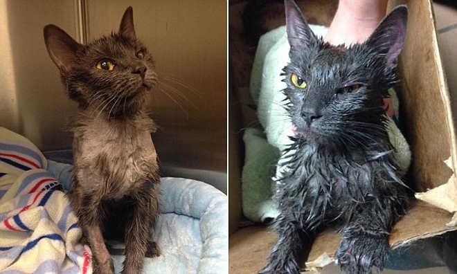 Gato foi atado, regado com gasolina, fechado num saco do lixo e sobreviveu