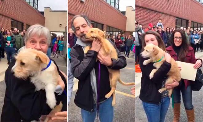 Vídeo tocante mostra o momento em que cães que seriam mortos encontram novas famílias e são salvos