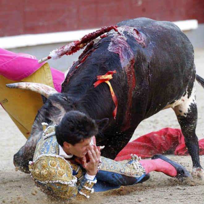 Toureiro tenta matar animal e é chifrado na boca e língua