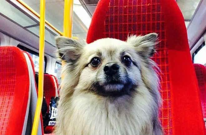Cães já podem viajar nos comboios e metros de Paris, com uma condição