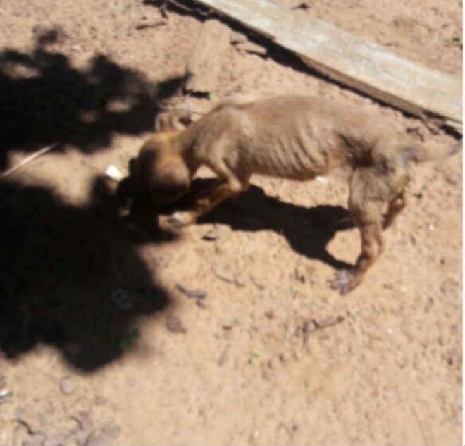 Polícia resgata cães maltratados em Caiapônia, GO; também foram encontrados animais mortos