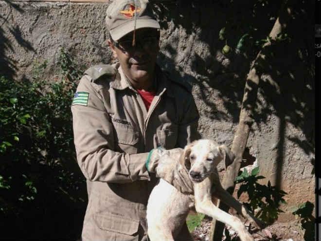 Bombeiros de Caldas Novas (GO) resgatam cachorro que ficou preso entre muro e parede de casa