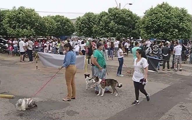 Grupo protesta contra envenenamento de mais de 40 cães em Catalão, GO