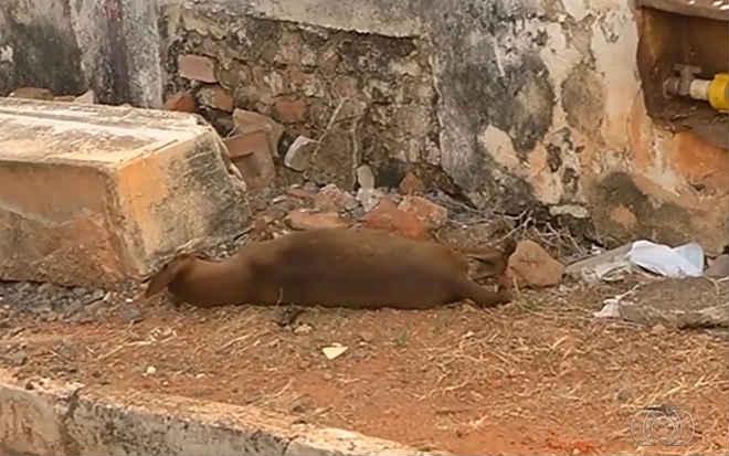 Polícia Civil começa a investigar a morte de cerca de 40 cachorros em Catalão, GO