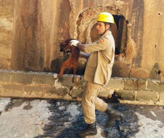 Bombeiros resgatam cachorro que caiu no córrego da Marginal Botafogo, em Goiânia, GO