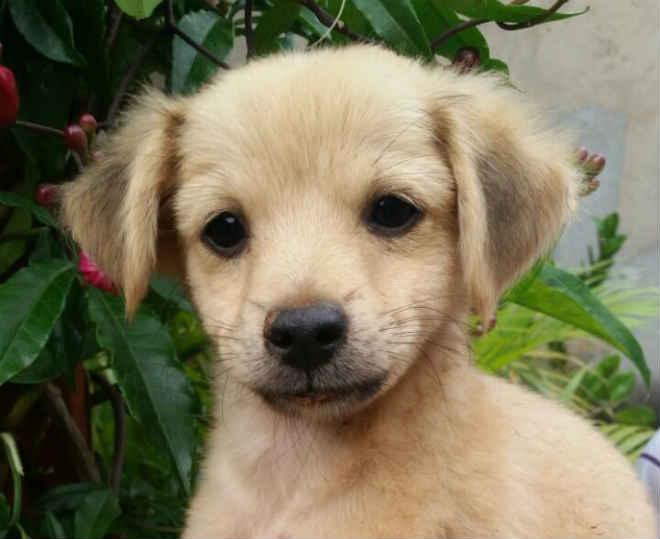 Grupo Miau Auau leva 50 animais para adoção ao Passeio das Águas Shopping em Goiânia, GO