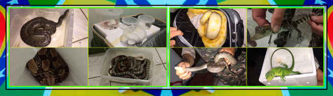 PM prende traficante de animais silvestres em Goiânia, GO