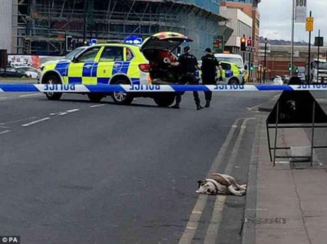 Polícia abate pitbulls que atacaram pessoas e prende o tutor