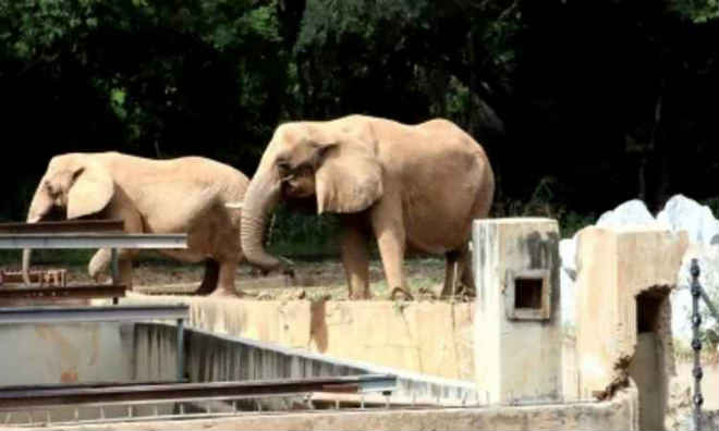 Comissão parlamentar apura más condições dos animais em zoo de Belo Horizonte, MG