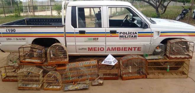 Em Espinosa (MG), PM apreende 34 pássaros da fauna silvestre e um homem é preso