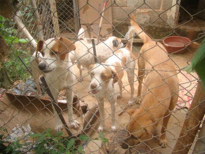 Protetores de animais se unem para criação de ONG em Ferros, MG