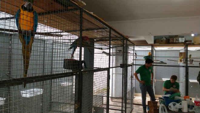 Operação em Guanhães (MG) apreende 54 pássaros silvestres, três deles em extinção