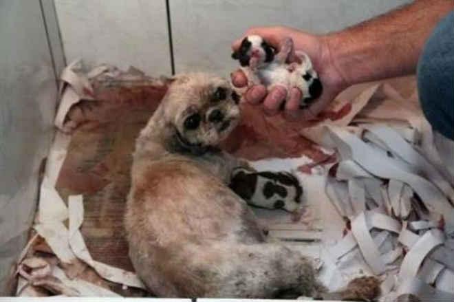 Com base em lei federal, ONG Vidanimal combate em Itabirito (MG) venda de pets que ganha força via web