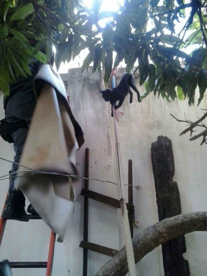 Bombeiros resgatam gato de concertina em Montes Claros, MG
