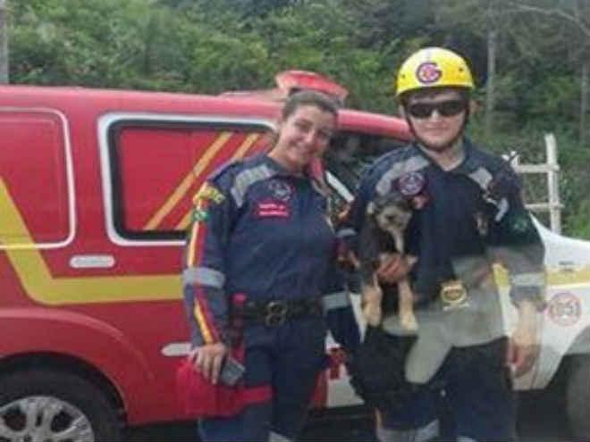 Cão cai de ponte e é resgatado em Pitangui, MG