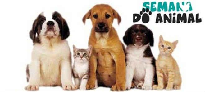 Projeto que institui semana de proteção aos animais é aprovado em Pouso Alegre, MG
