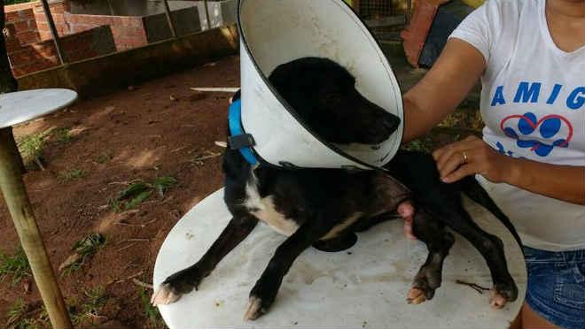Associação resgata animais abandonados e incentiva adoção em Valadares, MG