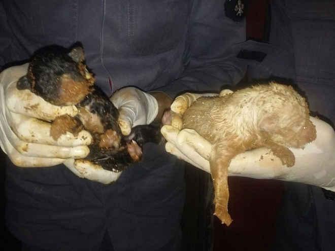 Filhotes de cachorro ficam presos em cano e são resgatados em Uberlândia, MG