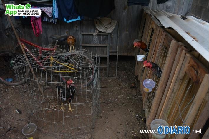 Criador de galos de rinha é detido em ação da Polícia em Estância Velha, MS