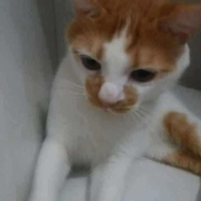 Tutora de gata denuncia CCZ de Campo Grande (MS) por sumiço de animal depois de castração
