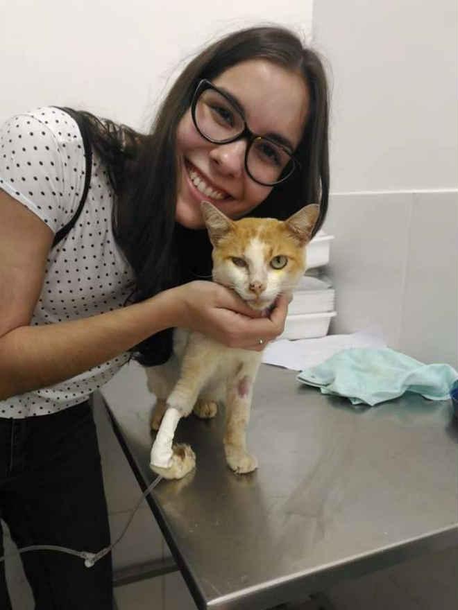Estudante resgata gato machucado e agora procura lar definitivo para o felino em Campo Grande, MS