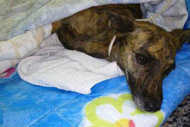 Maus-tratos a animais deverão ser informados à Dema em Cuiabá, MT
